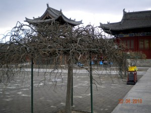J11 Datong 3 pagode bois arbre aux dragons  116